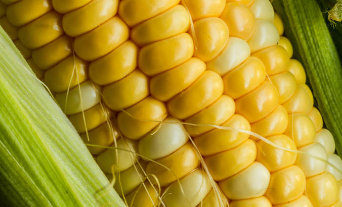 Want sustainable food? It will take a new normal for farming featured image