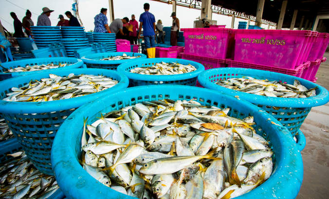 Fishery in Bangkok, Thailand