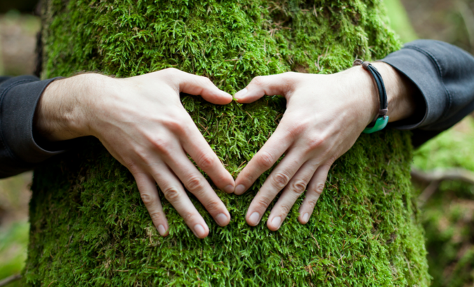 Do sustainability professionals strategize in the woods? featured image
