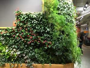 An indoor wall garden