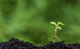 What's in your seed bank? Lessons for building resilience featured image