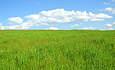 BP, Verenium Partner to Build Biofuel Plant in Florida  featured image