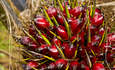 Kellogg's vows to only buy 'deforestation-free' palm oil featured image