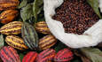 Hershey's and Mars sweeten market for West African cocoa farmers featured image