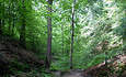 More Than a Half-Million Acres of Indiana Forests Certified featured image