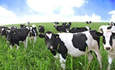 Organic Dairy Farming Avoided 40M Pounds of Fertilizer in 2008: Report featured image