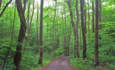 For U.S. Forests, REDD Begins at Home featured image