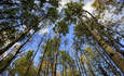 Texas-Sized Swath of Canadian Forest Saved by Industry-NGO Partnership featured image