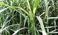 In Search of the Perfect Biofuel -- and Financing to Bring It to Market featured image