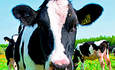 4,000 Ukrainian Cows Power Country's First Biogas Plant featured image