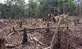 Can Brazil Save the Amazon? featured image