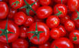 Why You Should Avoid Mass-Produced Tomatoes featured image
