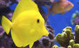 Aquarium trade takes steps to clean up fishy supply chains featured image