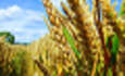 EPA Gives Ethanol the Green Light featured image