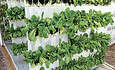 U.K. Zoo Explores Vertical Farming for a New Angle on Animal Feed featured image