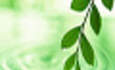 Green Cred is Essential to Brand Strength: Report featured image