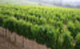 Wineries Embrace Green Business Practices but Hesitate Telling Customers featured image