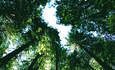 California Adopts New Forestry Offset Rules, but Angers Some Enviros featured image