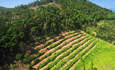 APP, Cargill plant U.N. deforestation pledge for 2030 featured image