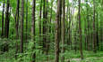 Staples and Dogwood Alliance Form Unlikely Forestry Offset Partnership featured image