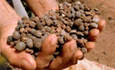 Kraft to Increase Purchases of Rainforest Alliance Certified Cocoa Ten-Fold by 2012 featured image