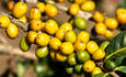 Mondelēz to measure sustainability of its coffee farmers featured image