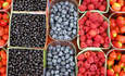 UK Retailers Test-Drive Greener Fruit Packaging to Cut Food Waste featured image