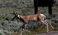 Walmart Partnership Saves 600K+ Acres of Wildlife Habitat  featured image