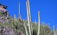 Exploring Sustainable Tourism in Tucson for a Greener Holiday featured image