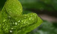Green Movement Grows in Global Hospitality Industry: Report  featured image