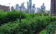 The Rise of Urban Farming and Other Varieties of Sustainable Ag featured image