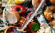 The VA Department's Veterans Canteen Service Attacks Food Waste featured image