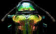 Tapping into Nature: Optics & photonics featured image