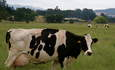 Video: Milking the sun, dairy takes on solar cogeneration featured image