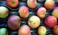 ugly apples food waste