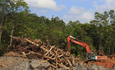 Responsible investors close in on palm oil industry  featured image