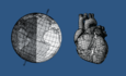 drawing of earth and drawing of human heart
