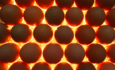 Eggs incubating at a hatchery