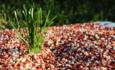 Fertilizer on plant