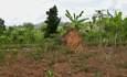 Mpanga Forest Reserve, Uganda