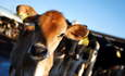 Dairy farmers move ahead on sustainability featured image