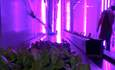 10 companies feeding the urban farming boom featured image