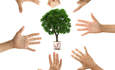 Lessons from Wells Fargo's green team program featured image