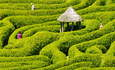 How companies can navigate through the eco-label maze featured image