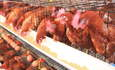 Why business needs to view farm animal rights as a green issue featured image