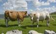 Can cattle be part of the climate change solution? featured image