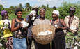 Haiti, cotton, Timberland, smallholder farmer