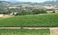 Jackson presses winemaking into sustainability innovation featured image