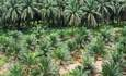 New, free tools aim to make palm oil more sustainable featured image