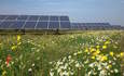 Solar farms could make fertile habitats for bees and butterflies featured image